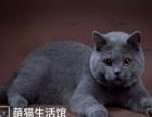 山西太原萌猫生活馆--猫舍换血!多只种公转让借配