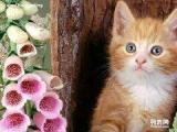 免费领养流浪小猫领养群群