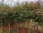 武汉室内外花卉植物养维护苗木补种送货,花园绿化园林设计施工
