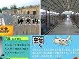 出售自家繁殖纯种喜乐蒂犬 北京同城可送货上门暑假特惠火爆出售