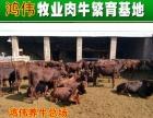 太原肉牛养殖厂黄牛犊价格