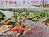 温室种植-立体草莓种植-观光农业