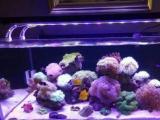 定做鱼缸清洗鱼缸消毒鱼缸造景治鱼病一条龙服务