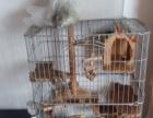 龙猫笼子及用品