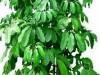 沈阳花卉绿植租赁
