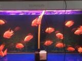 专业洗缸 养殖专业出身 更懂养鱼