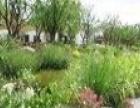 【上海上房园艺绿植基地招加盟