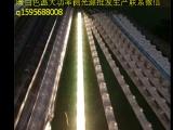 软膜天花吊顶拉布灯箱专用LED灯管替代品漫反射灯条