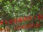 杉皮棚,沥青瓦棚,搭排栅架
