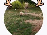 燕莎提供貓兒狗兒寄養單獨房間寄養包月寄養長期散養上門接送