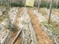 对外出租温室大棚两棚 可种植花卉 蔬菜 采摘园等