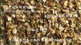 农泰公司批发白芷保发芽包回收中药材种植指南网