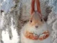 出售各種松鼠土撥鼠刺猬荷蘭豬等迷你小寵