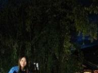 肇庆到云南旅游价格【昆明石林、大理、丽江6日纯玩游】980元