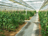 山东蔬菜大棚建设 哪里有提供口碑好的温室大棚
