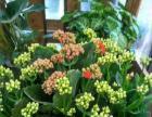 百花园艺 二十年品质如一 鲜花绿植全市最低