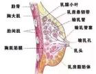 春季是乳腺保养的较佳时期