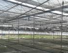 280亩温室农业种植公司整体转让