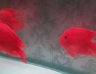 7条红鹦鹉,每只两百