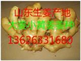 山东生姜基地鲜姜大量上市面姜小黄姜常年供应