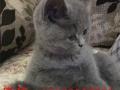 各种可爱 精品 萌翻你的猫猫快来看看吧!精心培养