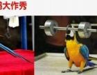 碧桂园首届百鸟风情展高雅海狮表演租赁