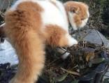 上海广州深圳北京英短猫多钱 淘宝搜:双飞猫