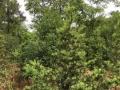 320国道旁 苗木