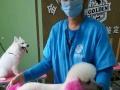 沈阳国家高级宠物美容师培训招生全国连锁加盟企业
