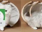 楚雄哪里开猫舍卖金吉拉 去哪里可以买得到纯种金吉拉