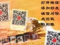 深圳同城诚信快秒到账【花】一【呗】一【套】一【现】