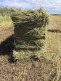 供应马场专用草料 东北羊草捆 青干草