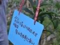 烟雨桐洲岛植树活动招募:让我们的心愿与树苗一起成长