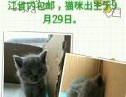 英短蓝猫和加菲猫出售