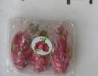 金色果园水果店 金色果园水果店诚邀加盟