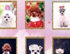 宠物美容师培训学校 宠物店加盟连锁 限时特惠