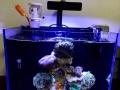 赫根珊瑚LED灯 使用两个月 400出