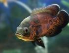 郑州高新区观赏鱼专卖锦鲤小热带鹦鹉龙鱼价格低送货上门