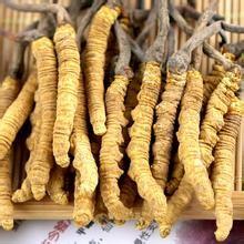 长治市回收冬虫夏草-冬虫夏草身份被确认中药材-还是保健礼品