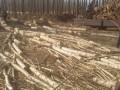 专业修树伐树移树找京福