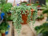 武汉室内盆景办公室绿化绿色花卉,武汉家庭绿化公司鲜花室外绿化