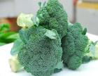 郑州食材配送中心 价格划算的蔬菜配送哪里找