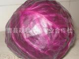 大量批发 新鲜蔬菜 绿色无公害 紫甘蓝 .包菜 【图】