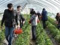 冬季旅游推荐 上海南汇农家乐 采草莓摘桔子 钓大鱼吃土菜