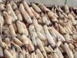 鱼台县志龙莲藕种苗 生产供应莲藕 南斯拉夫雪莲藕种苗 欢迎订购