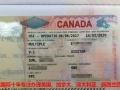 加拿大留学签证哪种通过率较高
