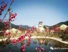 情人节99元品瓷都赏桃花 福州周边哪里好玩