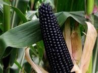 新大地特色农业 新大地特色农业诚邀加盟