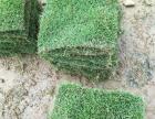 潮州优质绿化草皮出售