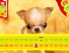 吉娃娃幼犬送狗用品24小时营业可刷卡
